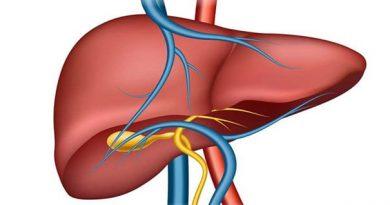 Karaciğer Nedir